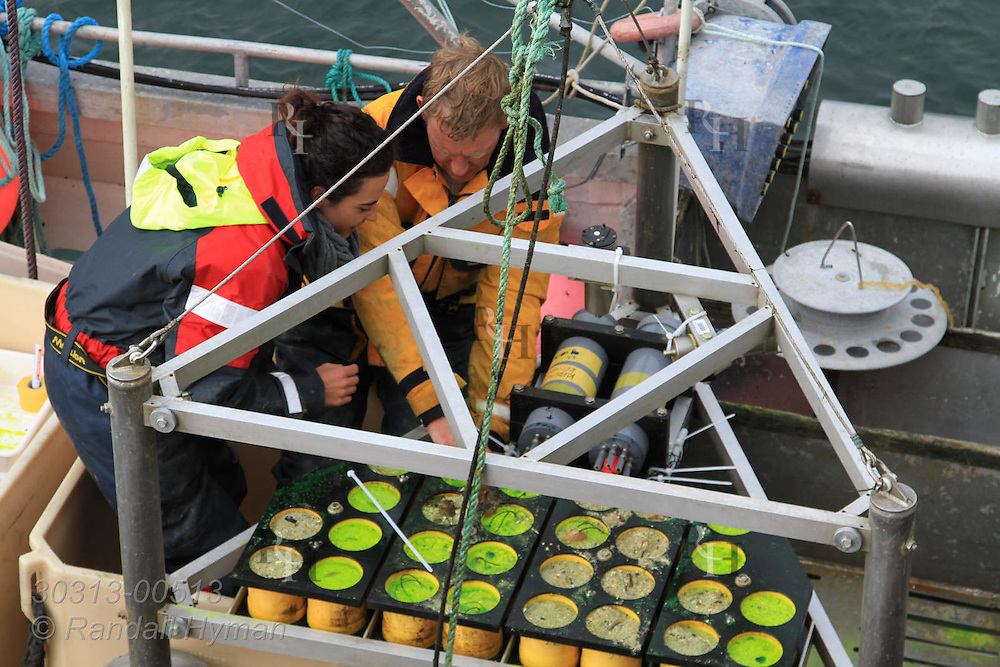 Doctoral student Irene Ballesta Artero and marine ecologist Rob Witbaard prepare experiment of calcein-dyed Arctica islandica clams for seafloor deployment; Ingoya island, Finnmark, Norway.