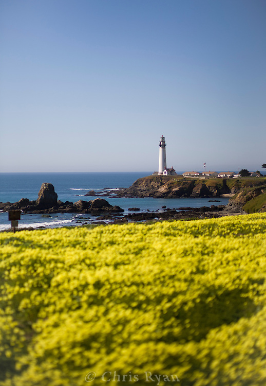 Wildflowers and Pigeon Point Lighthouse, California