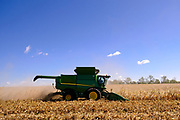 30 SEPTEMBER 2020 - WOODWARD, IOWA: KEVIN LAMBERT operates his combine in a cornfield on Lambert family land in Woodward. Lambert said it would take nearly twice as long to combine this year's corn compared to last year's because of damage to fields caused by the derecho wind storm that roared through central Iowa in August. The derecho wind storm damaged more than 550,000 acres of Iowa cornfields. In addition to derecho damage, Iowa farmers are wrestling with drought related damage. A persistent drought in central Iowa has stunted corn plants and reduced yields. Because of the unusually dry weather, this year's harvest is three weeks ahead of last year's and nine days ahead of average.       PHOTO BY JACK KURTZ