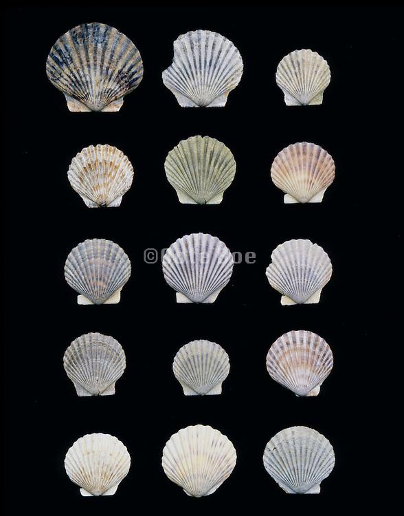 arrangement of shells against a black background same but different
