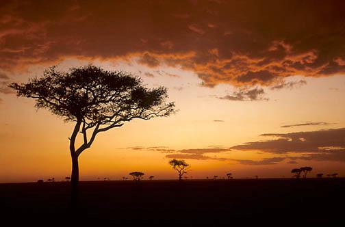 Kenya, Africa. Sunset over Serengeti Plains. Masai Mara Game Reserve. Kenya.