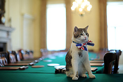 Larry, the 10 Downing Street cat, sits on the cabinet table wearing a British Union Jack bow tie ahead of the Downing Street street party.