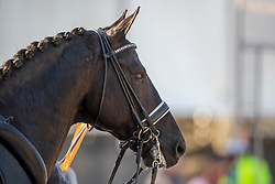 Gal Edward, NED, Glock's Toto Jr.<br /> Nederlands Kampioenschap dressuur<br /> Ermelo 2020<br /> © Hippo Foto - Sharon Vandeput<br /> 20/09/2020