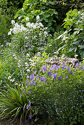 Empty urn in border with Geranium 'Johnson's Blue', Libertia grandiflora and the scented Hesperis matronalis var. albiflora - sweet rocket