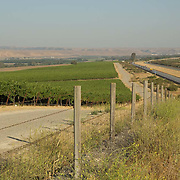 Vineyards for wine producing. Lompoc, California. USA