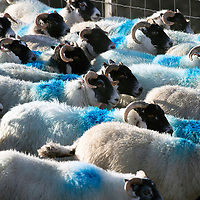 Tectracer Forensic Sheepmarker