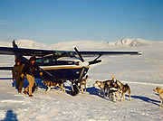 Phil Barr's sled dogs waiting for Lake Clark Air Service pilot Mike Reynolds to fly them off the Bonaza Hills strip in a Cessna 206, Alaska.