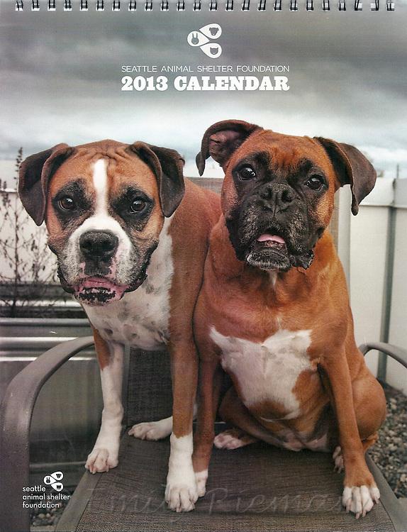 Seattle Animal Shelter Foundation calendar 2013