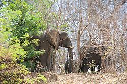 Elephants On The Zimbabwe Side