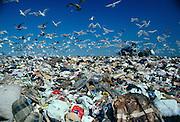 Fresh Kills Landfill in Staten Island.