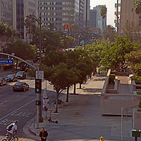 Hawks nest in the vicintiy of Korea Town in Los Angeles, California.