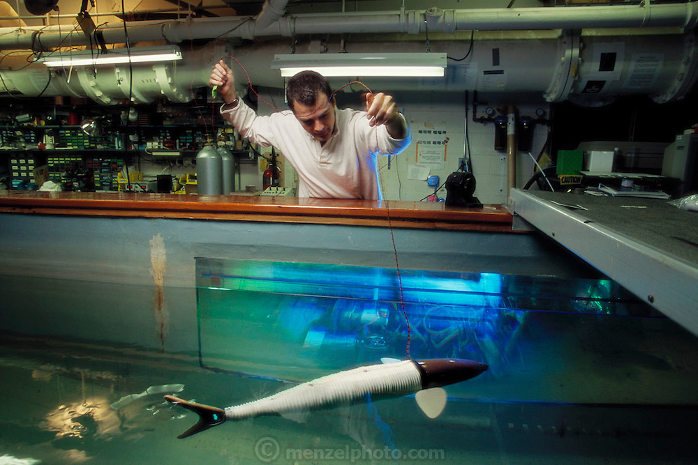 Researcher John Kumph monitors the free-swimming robot pike he has designed. The robot is used in research into the swimming efficiency of fish. The robot is powered by motors, which pull on its skeleton, producing a realistic swimming stroke. It is steered by its fins. A human operator using a radio controls the battery-powered robot. Photographed at the Massachusetts Institute of Technology (MIT), Cambridge, MA,  USA.
