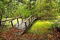 NC01279-00...NORTH CAROLINA - Arched bridge over a marsh on the Center trail through a  maritime forest at Nags Head Woods Preserve on the Outer Banks at Nags Head.