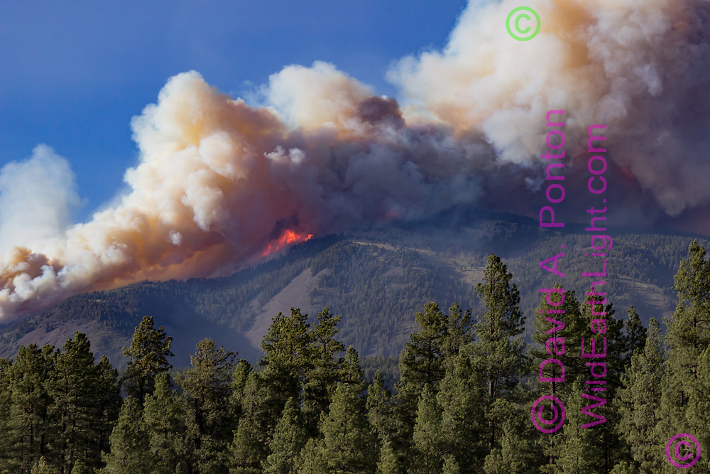 Thompson Fire burning on Redondo Peak June 3, 2013, generating large amounts of smoke, viewed from the south. Valles Caldera National Preserve, New Mexico, © 2013 David A. Ponton
