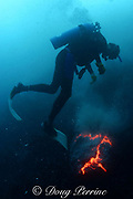 diver observes red-hot lava from Kilauea Volcano erupting underwater, Puna, Hawaii Island ( the Big Island ), Hawaii, U.S.A. ( Central Pacific Ocean ) MR 310