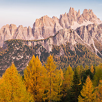 Fall color of larch trees at the base of Cinque Torri before sunset