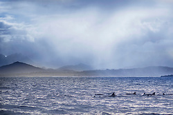 Scenic view of dolphins at Indian Ocean, Mauritius