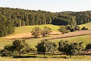 Streuobstwiese, Landschaft bei Höchst-Forstell, Odenwald, Naturpark Bergstraße-Odenwald, Hessen, Deutschland | landscape near Höchst-Forstel, Odenwald, Hesse, Germany