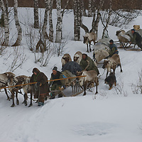 North of the Arctic Circle in Russia, men in the the last nomadic Komi reindeer herding clan slow down sleds to keep them from running over reindeer as they descend into a stream bed.
