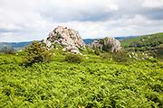Granite upland landscape Greator Rocks, Dartmoor national park, Devon, England, UK