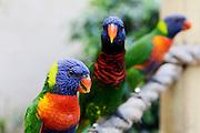 a line of Parrots