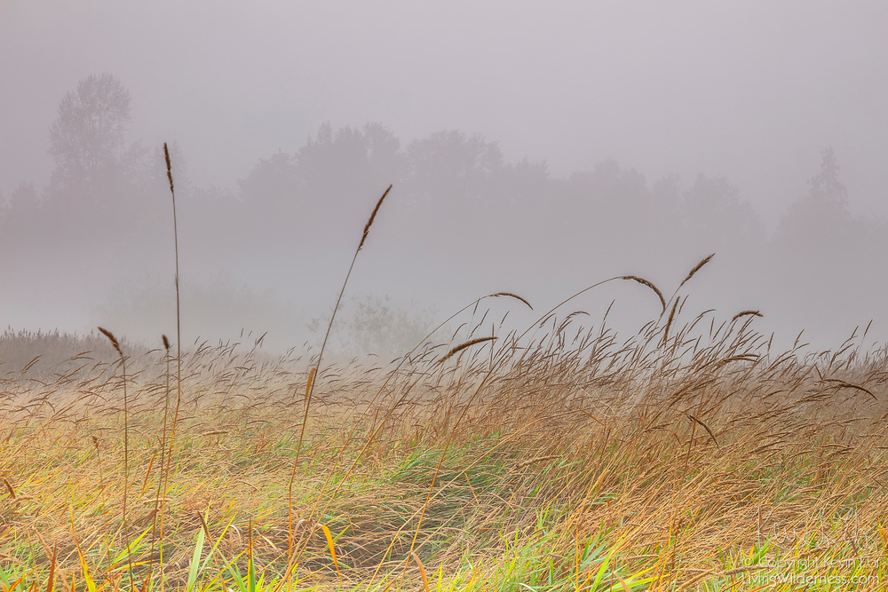 A smoky haze from large wildfires settles over the wetlands over North Creek Park in Bothell, Washington.