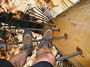 Tom climbs rebar rungs of the public Diamond Tree, a 51-meter tall Karri (Eucalyptus diversicolor) mounted with a fire lookout. Drive 10 km south of Manjimup on the South Western Highway, in Western Australia. Growing up to 90 meters, Karri trees stand amongst the tallest species on earth.