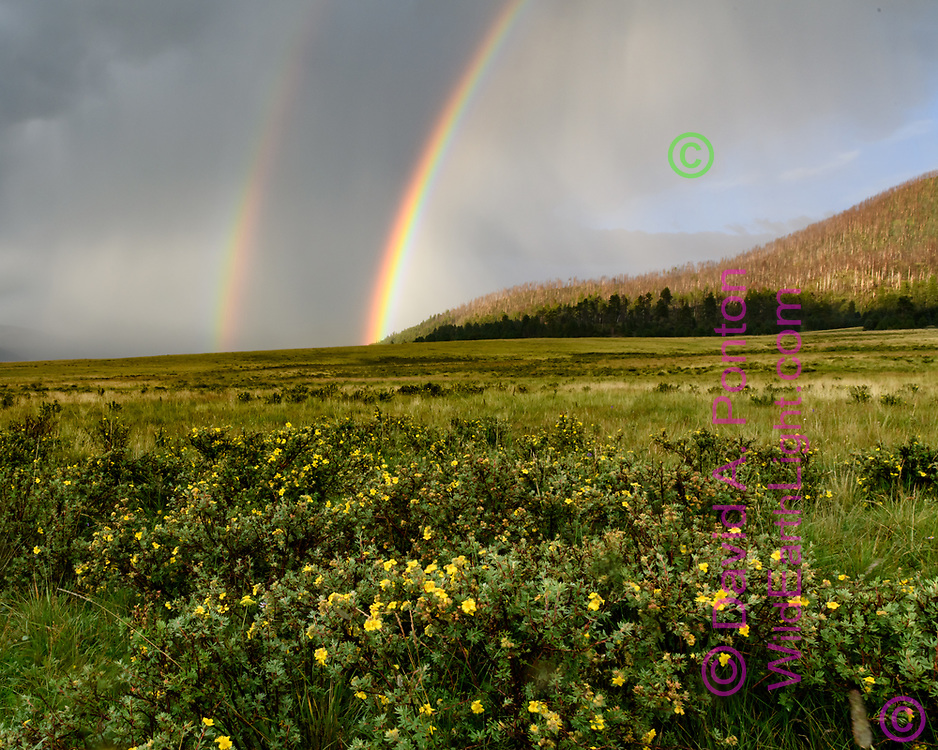 Rainbow at the Valle Grande, with shrubby cinquefoil in bloom, Valles Caldera National Preserve, © David A. Ponton
