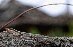 11-10-2008 REPORTAGE: KILIMANJARO CHALLENGE 2008: TANZANIA<br /> Flora en fauna rond onze lodge Kigongoni, de homebase van onze trip. De Kilimanjaro Challenge van de BvdGf.<br /> ©2008-WWW.FOTOHOOGENDOORN.NL
