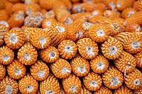 Corn from the farms around Wuliangshan Nature Reserve, Mount Wuliang Nature Reserve in Jingdong county, Yunnan, China