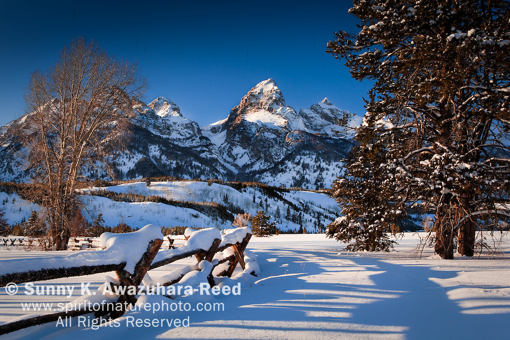 Grand Teton Range in Grand Teton National Park on a sunny winter day.  Snow covered fence and trees are in the foreground.
