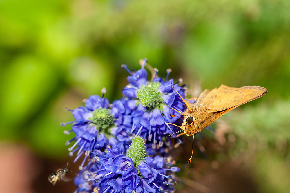 A butterfly clings to a plant at the Baker Arboretum & Downing Museum in Bowling Green, Kentucky on Thursday, August 17, 2017. Copyright 2017 Jason Barnette