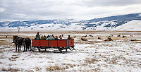 Sleigh rides typically last about an hour, and participants have an opportunity to learn about elk and their behavior from sleigh drivers while getting a close view of the animals wintering on the National Elk Refuge.