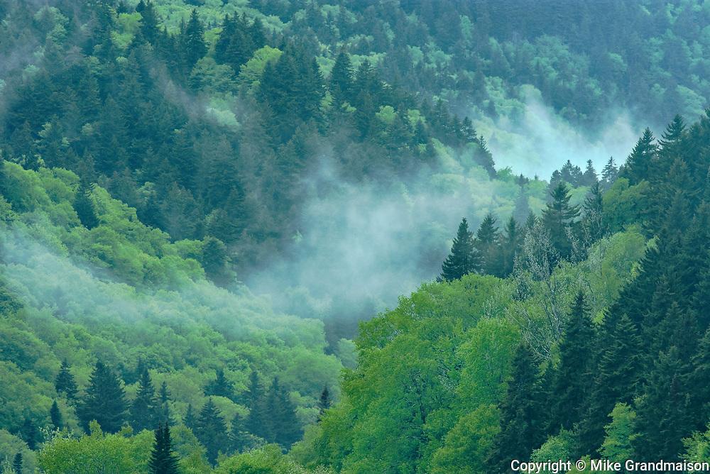 Forest in fog<br /> Kouchibuguac National Park<br /> New Brunswick<br /> Canada