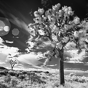 Flaring Past And Present - Joshua Tree National Park CA - Infrared Black & White