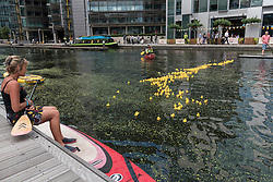 © Licensed to London News Pictures. 14/07/2016. London, UK. A rubber duck takes place in the canal at Merchant Square, Paddington, with people on paddleboards and a leafblower in a canoe in assistance.  Participants donated money to sponsor a duck to raise funds for COSMIC's More Smiles Appeal for the redevelopment of the children's intensive care unit at nearby St Mary's Hospital, Paddington. Photo credit : Stephen Chung/LNP