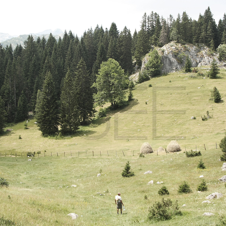 """mountain in Durmitor park.There are several arguments about the derivation of the name  """"Montenegro"""", one of these relates to dark and deep forests  that once covered the Dinaric Alps, as it was possible to see them from the sea. <br /> Mostly mountainous with 672180 habitants on an area of 13812 Km², with a population density of  48 habitants/Km². <br /> It borders with Bosnia, Serbia, Croatia, Kosovo and Albania but  Montenegro has always been alien to the bloody political events that characterized Eastern Europe in recent decades. <br /> From 3 June 2006, breaking away from Serbia, Montenegro became an independent state. <br /> In the balance between economy devoted to sheep farming and a shy tourist, mostly coming from Bosnia and Herzegovina, Montenegro looks to Europe with a largely unspoiled natural beauty. <br /> Several cities in Montenegro, as well as the park Durmitor, considered World Heritage by UNESCO but not yet officially because Montenegro has yet to ratify the World Heritage Convention of UNESCO."""