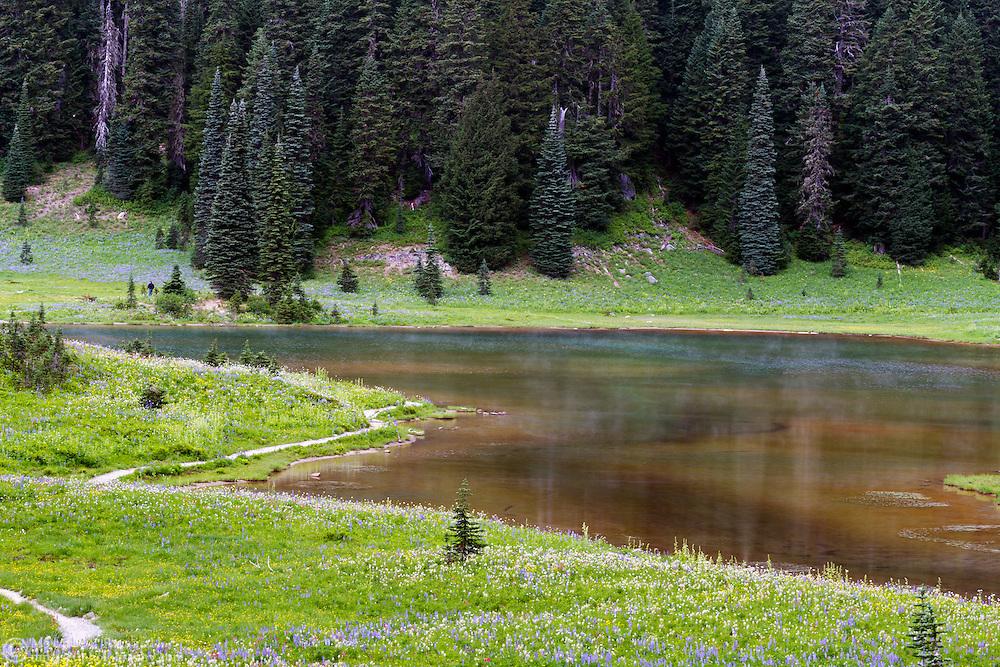 Wildflowers grow along side Tipsoo Lake in Mount Rainier National Park in Washington State, USA.