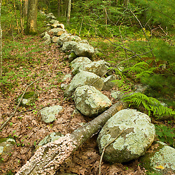 An old stone wall in the forest at the Tucker Preserve in Pembroke, Massachusetts.
