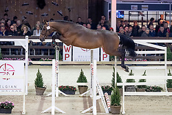 061, Quando vd Zandhoeve <br /> Hengstenkeuring BWP - Lier 2019<br /> © Hippo Foto - Dirk Caremans<br /> 18/01/2019