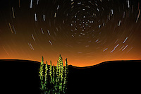 Great Mullein (Verbascum thapsus) and startrails, Sibillini National Park, Italy; WWoE Mission