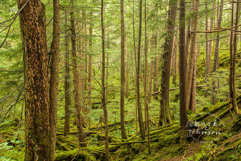 Lush temperate rain forest, Tongass National Forest, Sitka, Alaska, USA
