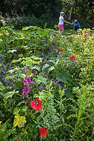 AMSTERDAM / HALFWEG -  wilde bloemen op de Amsterdamse Golf Club.     COPYRIGHT KOEN SUYK