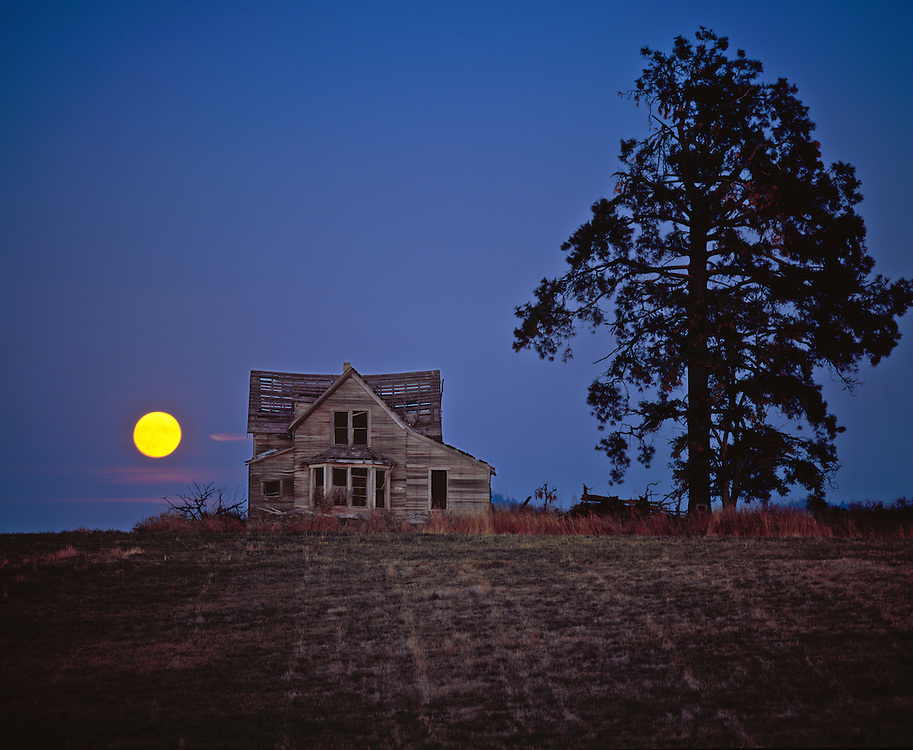 Editions of 17<br /> Harvest moon rises over the Harrison Homestead in Northern Idaho with an abandoned old homestead and large evergreen tree against a periwinkle sky PR
