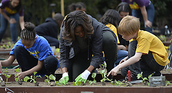 61338002<br /> U.S. First Lady Michelle Obama plants with school children in the White House Kitchen Garden on the South Lawn of the White House in Washington D.C., capital of the United States, April 2, 2014. U.S. First Lady Michelle Obama joined FoodCorps leaders and local students to plant the White House Kitchen Garden for the sixth year in a row, USA,  Wednesday, 2nd April 2014. Picture by  imago / i-Images<br /> UK ONLY