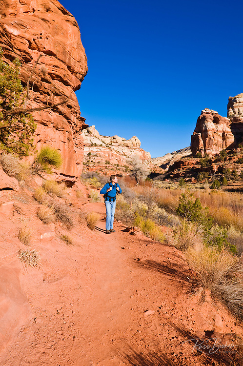 Hiker on the trail to lower Calf Creek Falls, Grand Staircase-Escalante National Monument, Utah