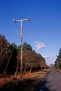 A5EXN7 Telegraph pole and phone lines in rural area Rendlesham forest Suffolk England