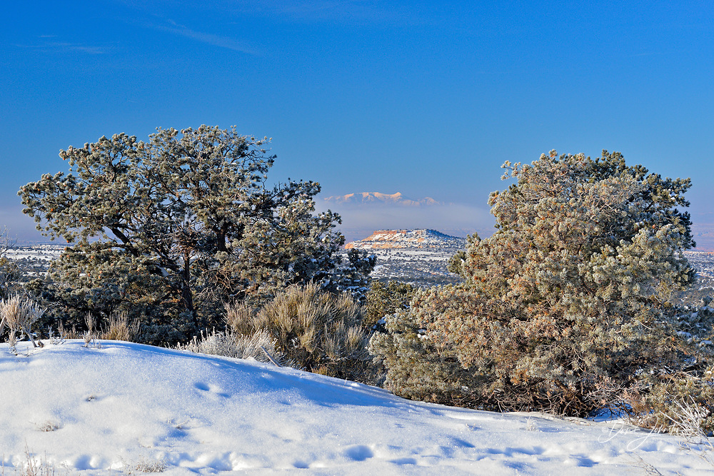 Frosted juniper trees, Canyonlands National Park, Utah, USA