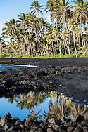 Punalu'u Park, famous for its black sand beach and green sea turtle habitat, in the district of Ka'u on the Big Island of Hawaii, USA, America