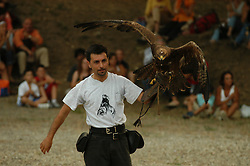 Brindisi di Montagna, Basilicata, Italy - Hawk in the cultural park of Grancia.